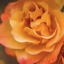 Teresa Wilson - Summer Rose