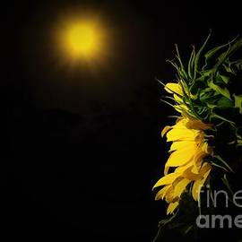 Angela J Wright - Summer Solstice Flower 2016