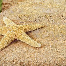 Marianne Campolongo - Summer Starfish