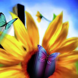 Kathy Franklin - Summer Sunflower