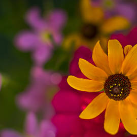 F Leblanc - Summer Sunshine by fleblanc