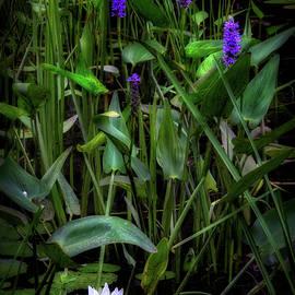 Bill Wakeley - Summer Swamp 2017