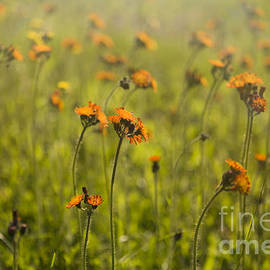 Summer Wildflowers - Diane Diederich