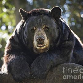 Jamie Pham - Sun Bear