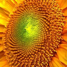 Ian  MacDonald - Sun Burst