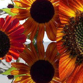 Tina M Wenger - Sun In Sunflowers