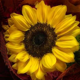 Arlene Carmel - Sun In The Flower