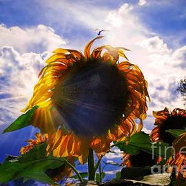 Janice Rae Pariza - Sun On Sun And A Dragonfly