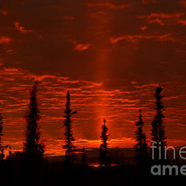 Sharon Mau - Sun Pillar Autumn Sunset over a Permafrost Forest Interior Alaska