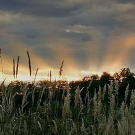 Teresa A Lang - Sun Rays of Summer