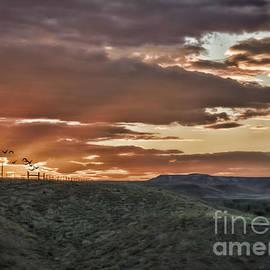 Janice Rae Pariza - Sun Rays on Colorado Sage