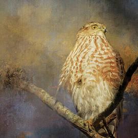 Jai Johnson - Sunbathing In Winter Hawk Art