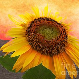 Beverly Guilliams - Sunburst Flower
