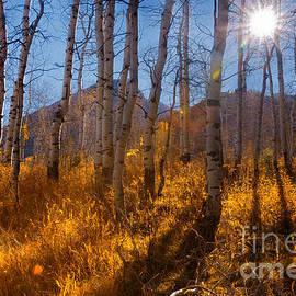 Carolyn Rauh - Sunburst into the Aspen Forest