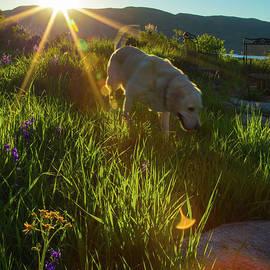 Sundown Flower Dog