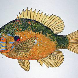 Don Seago - Sunfish South USA