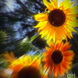 Bobbee Rickard - Sunflower Abstract