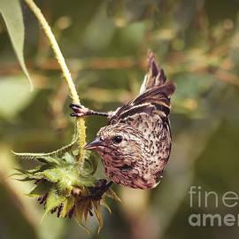 Janice Rae Pariza - Sunflower and the Sparrow