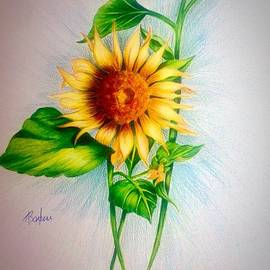Anne Barberi - Sunflower