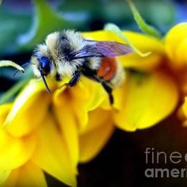 Krista Carofano - Sunflower Bee