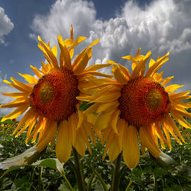 Debra and Dave Vanderlaan - Sunflower Blue Double