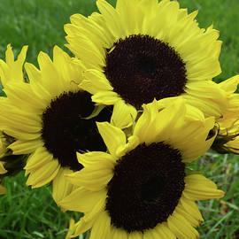 Aimee L Maher Photography and Art Visit ALMGallerydotcom - Sunflower Bouquet