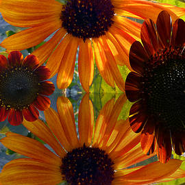 Tina M Wenger - Sunflower Bursts