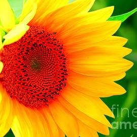 Becky Kurth - Sunflower Cheer