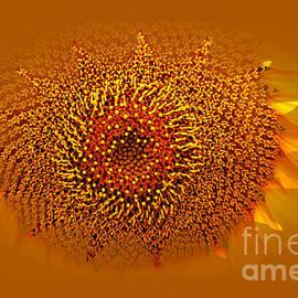 Larry Weingartner - Sunflower Close Up Framed