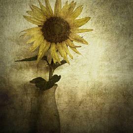 Cynthia Lassiter - Sunflower