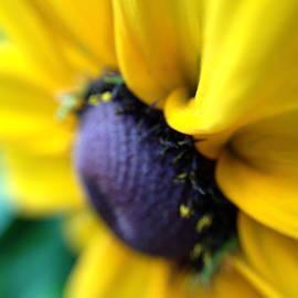 Damijana Cermelj - Sunflower