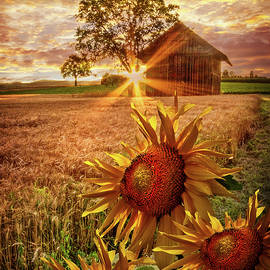 Debra and Dave Vanderlaan - Sunflower Evening