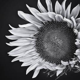 William Dey - Sunflower Face