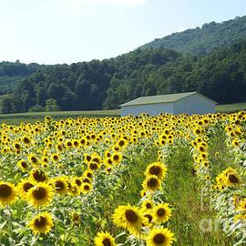 Annlynn Ward - Sunflower Field