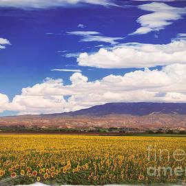 Janice Rae Pariza - Sunflower Field Below Grand Mesa