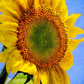 Christina Rollo - Sunflower - Good Morning Sunshine