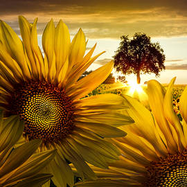 Debra and Dave Vanderlaan - Sunflower Heaven