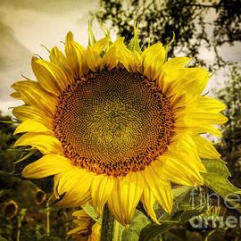 Janice Rae Pariza - Sunflower In Style