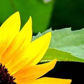 Karen  Majkrzak - Sunflower Love