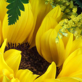 Tom Mc Nemar - Sunflower Macro