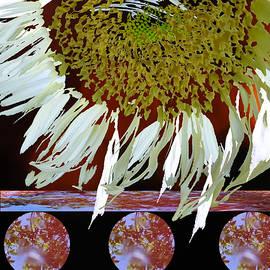 Lyn  Perry - Sunflower on a Shelf