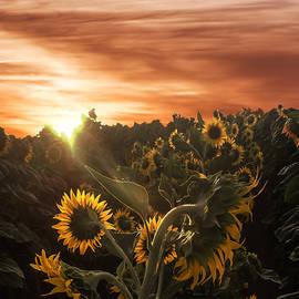 Wes Jimerson - Sunflower Rise