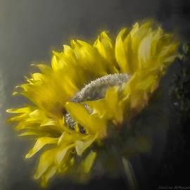 Melissa Bittinger - Sunflower Slumber