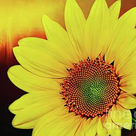 Kaye Menner - Sunflower Sunset by Kaye Menner