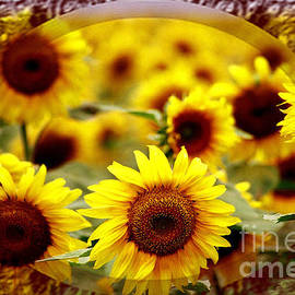 Larry Weingartner - Sunflower Trio Framed