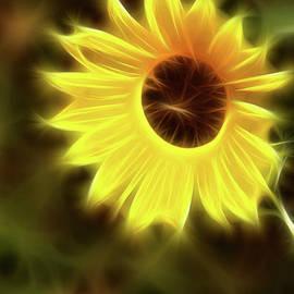 Gary Gingrich Galleries - Sunflowers-4986-Fractal