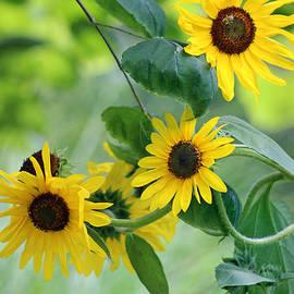 Karen Adams - Sunflowers and Redbud