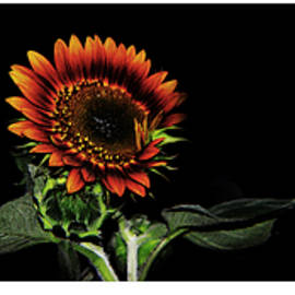 Tina M Wenger - Sunflowers Collage