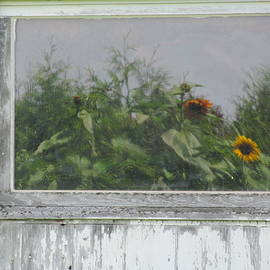 Tina M Wenger - Sunflowers On Barn