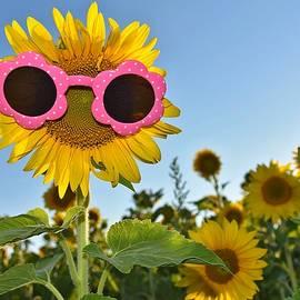 Maria Dryfhout - sunglasses on sunflower